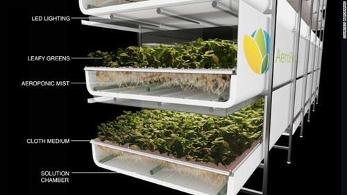 Cấu trúc một khay trồng cây trong nông trai Aero Farms nơi rễ cây không trồng trên đất mà được cung cấp chất dinh dưỡng bằng cách phun sương. Ảnh:CNN.