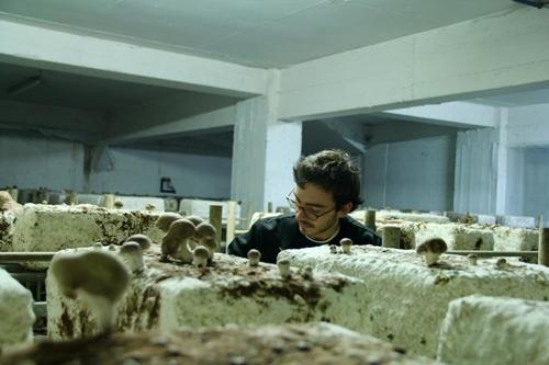 Những loại nấm như nấm mỡ, nấm rơm, nấm bào ngư được trồng trên những viên gạch được từ phân hữu cơ.