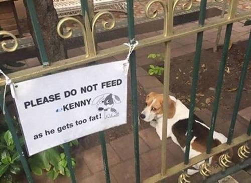 Xin đừng cho Kenny ăn, anh ta quá béo rồi.