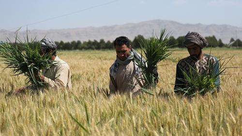 Ngân hàng thế giới nỗ lực giáp các quốc gia cải thiện ô nhiễm môi trường do phát triển nông nghiệp. Ảnh: World Bank.