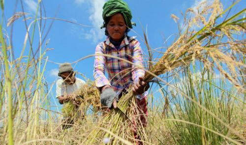 Phát triển nông nghiệp cũng gây ra nhiều vấn đề ô nhiễm tại các quốc gia châu Á, trong đó có Việt Nam.