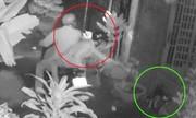 Hai cáºu tặc dùng súng Äiá»n trá»m chó trong 5 giây