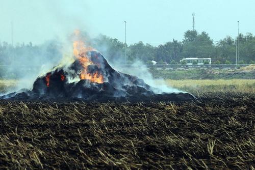 Người dân Nhơn Trạch, Đồng Nai đốt đồng bên cao tốc TP HCM - Long Thành - Dầu Giây đầu tháng 4. Ảnh: Phước Tuấn