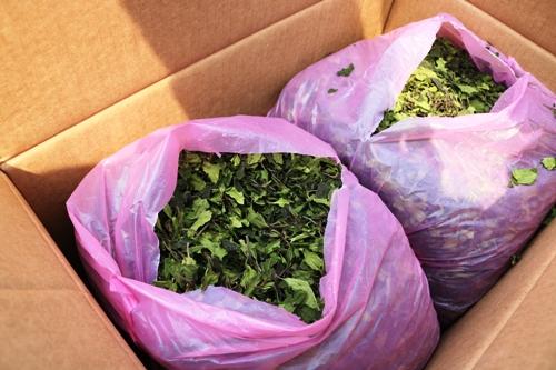 Mỗi một thùng carton bên trong chứa từ 8-10kg lá khát khô. Ảnh: Giang Chinh
