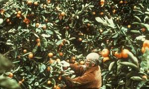 Lão nông Nhật đi khắp thế giới gieo mầm trên sa mạc