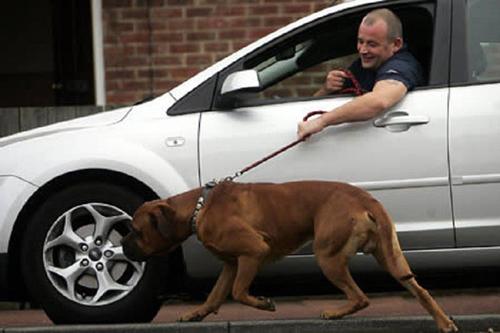 Lái xế hộp dắt cún đi dạo mới thích chứ.