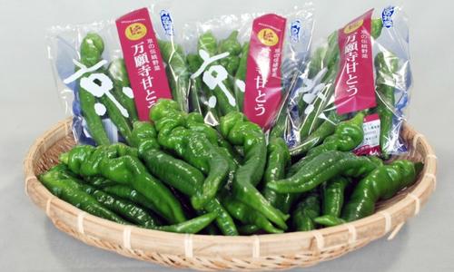 Lý do ớt ngọt Nhật Bản bán được giá cao