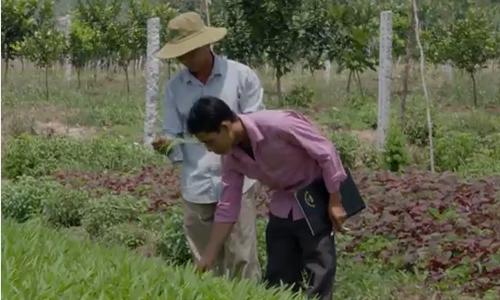 Nông dân An Giang tương trợ nhau cùng trồng rau sạch