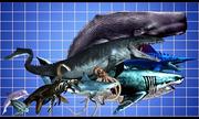 So sánh kích thước các loài động vật ăn thịt dưới nước