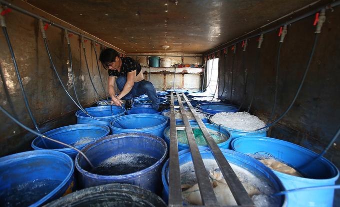 Nhiều loài cá đặc sản ở chợ đầu mối trên núi