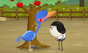 Các loài chim nuốt thức ăn như thế nào?