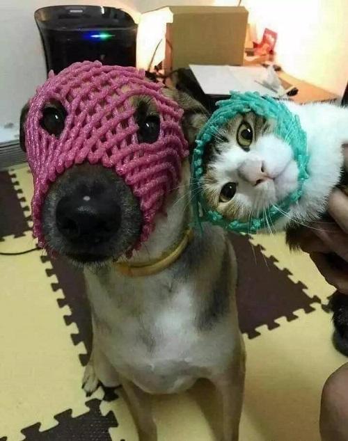 Cặp đôi ninja chó mèo.