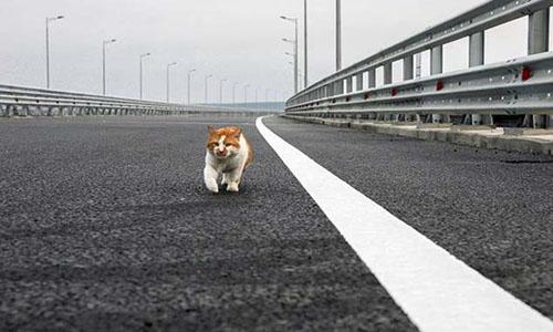 Mostik bước trên cây cầu nối Nga và Crimea hôm 14/5. Ảnh: Instagram /cat_the_most.