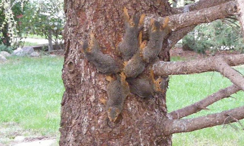 6 con sóc bám trên thân cây. Ảnh:Nebraska Humane Society.