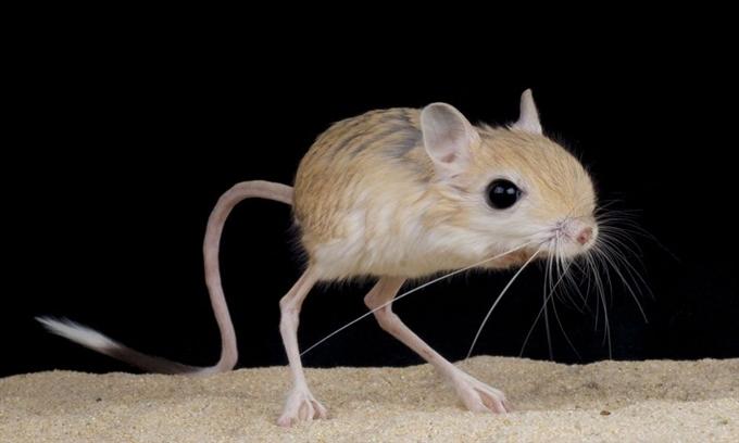 10 loài động vật có vú nhỏ nhất thế giới