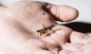 Robot côn trùng chạy bằng laser cất cánh