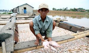 Công an điều tra việc hơn 1.500 tấn cá chết trên sông La Ngà