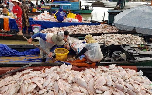 Đến 18h ngày 21/5, lượng cá đổ về bến La Ngà chở nên quá tải, thương lái không kịp thu mua vì số lượng cá quá nhiều. Ảnh: Phước Tuấn
