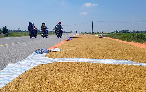 Nông dân trải bạt phơi lúa bên tuyến đường đi mỏ sắt Thạch Khê đoạn qua huyện ThạchHà. Ảnh: Đức Hùng