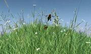Thủ phạm khiến số lượng ong mật sụt giảm mạnh