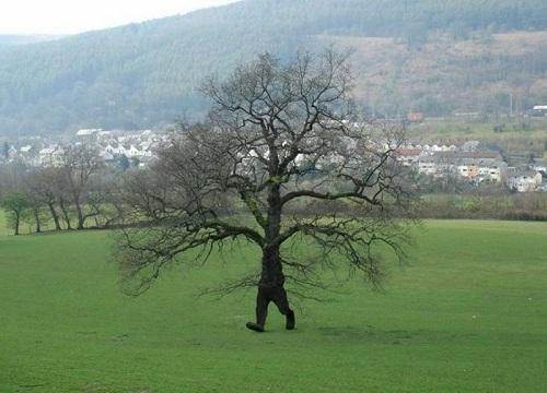 Khi cây cũng biết chạy biết đi.