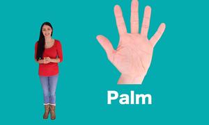 Từ vựng về lòng bàn tay, mu bàn tay trong tiếng Anh