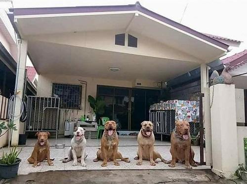Đường vào nhà em sao lắm chó.