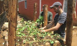 Học nông dân Kenya trồng rau sạch trên thân chuối