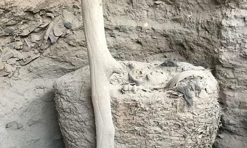 Kén vải chứa xác ướp nguyên vẹn sau nghìn năm khai quật ở Peru. Ảnh: ULBP.