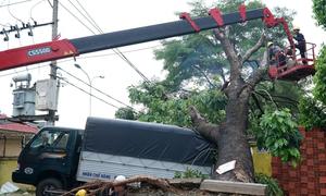 Cây xà cừ đè xe tải, kéo đổ hàng loạt trụ điện ở Sài Gòn