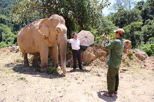 Lâm trường Khe Giữa, đơn vị quản lý voi đang có kiến nghị trả lại voi cho tỉnh Quảng Bình nhằm phục vụ du lịch. Ảnh: Hoàng Táo