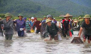 Hàng trăm người lội đầm bắt cá cầu may