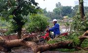 Hàng loạt cây đổ sau mưa giông ở khu đô thị Linh Đàm