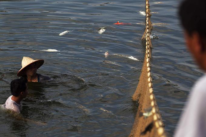 Cá chết nổi khắp hồ Hoàng Cầu, Hà Nội