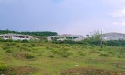 Trung tâm sản xuất giống chăn nuôi gần 20 tỷ đồng bỏ hoang