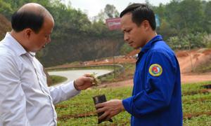 Doanh nhân 7X tự vỡ đất trồng chè trên đỉnh núi Cao Bằng