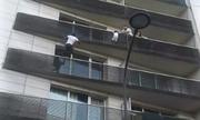 Gia đình bé trai Pháp cảm ơn 'người nhện' cứu mạng