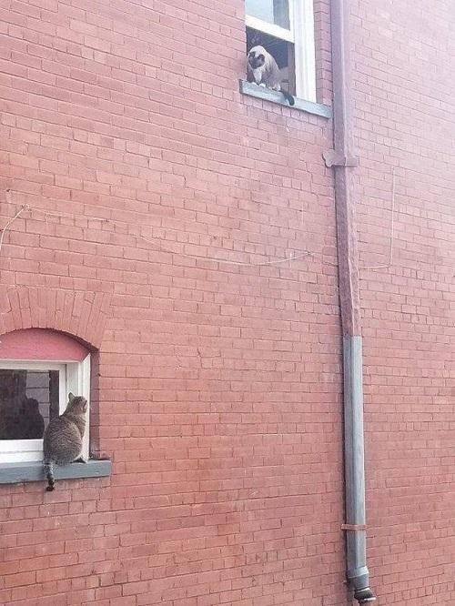 Trộm nhìn nhau qua khung cửa sổ.