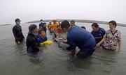 Cá voi chết do nuốt hơn 80 túi nylon ở Thái Lan