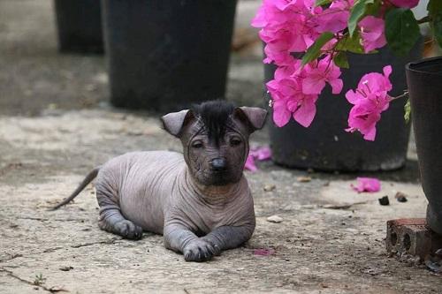 Trang phục mát mẻ của cún cưng trong những ngày hè oi ả.