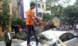 Cây xanh bật gốc đè xế hộp tiền tỷ trên phố Hà Nội
