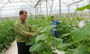 Vườn dưa công nghệ cao cho gần 20 tấn quả mỗi năm
