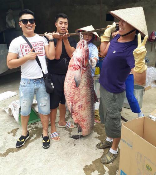 Bắt được cá trắm khủng nặng 61 kg ở Yên Bái