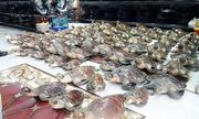 72 tiêu bản rùa quý hiếm trong cửa hàng mỹ nghệ ở Vũng Tàu
