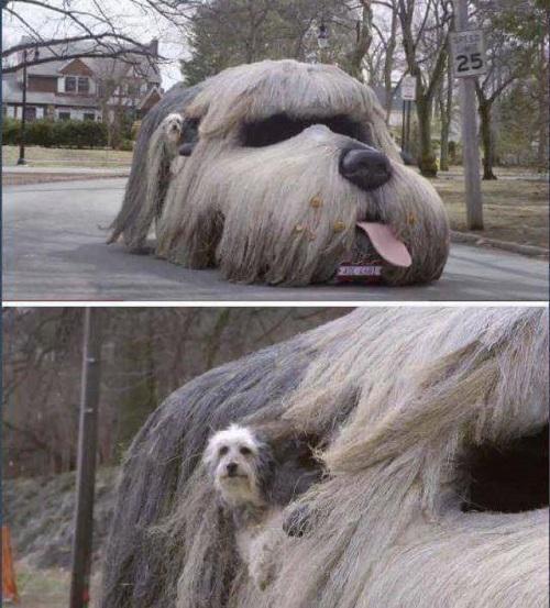 Xế xịn của cún cưng.