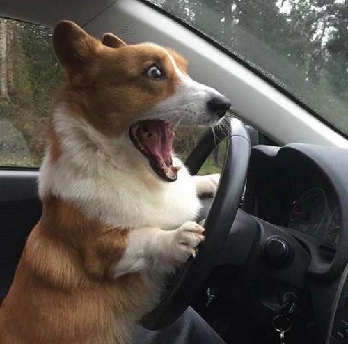Lần đầu được lái xe.