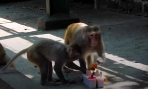 Vườn thú Ấn Độ cho động vật ăn kem hoa quả giải nhiệt
