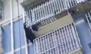 'Người nhện' Trung Quốc cứu bé trai hai tuổi lơ lửng trên tầng 5