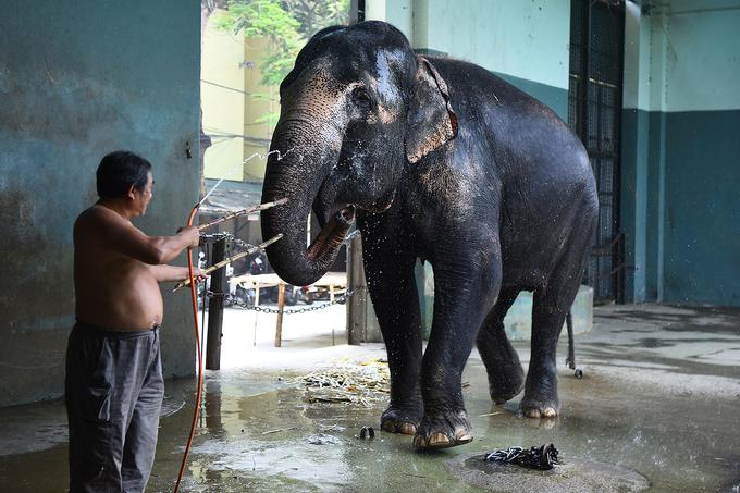 'Nghệ sĩ thú' ở Liên đoàn xiếc Việt Nam