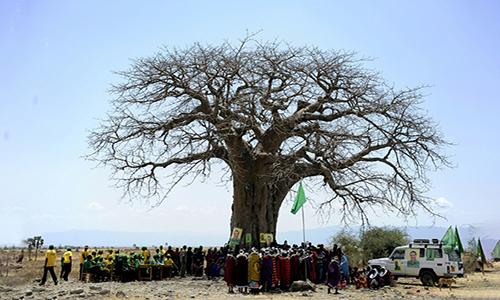 Một cây bao báp chết ở châu Phi. Ảnh: AFP.